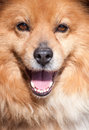 Free Portrait Of A Not Purebred Dog Stock Photography - 30412622