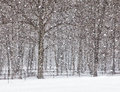 Free April Snow Showers Royalty Free Stock Photography - 30418037