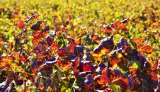 Colors Of Autum.... Royalty Free Stock Image