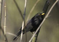 Free Bird Stock Images - 30416144