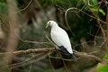 Free White Bird Royalty Free Stock Image - 30422206