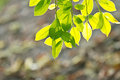 Free Fresh Spring Green Leaves Royalty Free Stock Images - 30427079