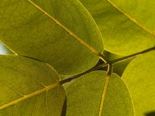 Free Green Leaves Stock Image - 30421991