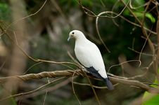 Free White Bird Royalty Free Stock Image - 30422206