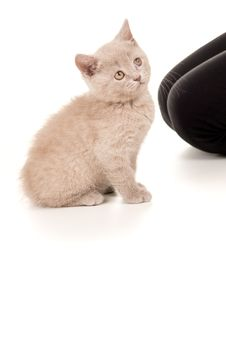 Free Kitten Sitting And Looking Up Stock Images - 30425384