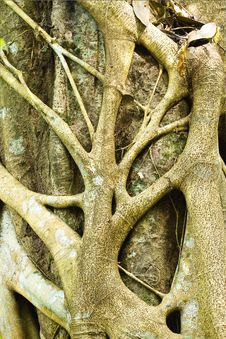 Free Tree Roots In The Forest Royalty Free Stock Photos - 30427738