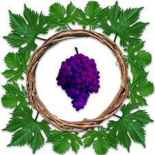 Free Grape Frame Royalty Free Stock Image - 30431676
