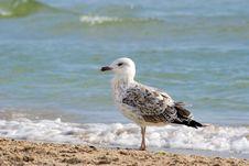 Free The Seagull Stock Photos - 30432083