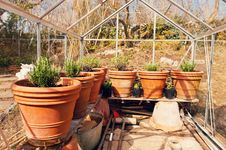 Free Plants On Pots In Glasshouse Royalty Free Stock Images - 30436739