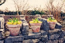 Free Plants On Pots In Glasshouse Stock Photos - 30436753