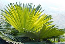 Free Group Of Palm Leaves2 Stock Images - 30441974