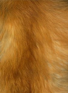 Free Fox Fur Stock Images - 30445074
