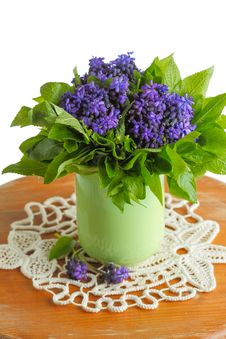 Free Grape Hyacinths Flowers Royalty Free Stock Image - 30445656