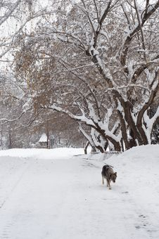 Free Dog In Winter Alley. Royalty Free Stock Image - 30448836