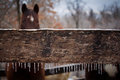 Free A Winter Day In The Horse Corral Royalty Free Stock Images - 30454029