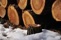 Free Tree Stump Royalty Free Stock Photos - 30457698