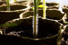 Free Seedlings Stock Photo - 30451150