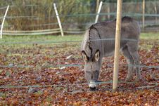 Free The Donkey Royalty Free Stock Photography - 30451777