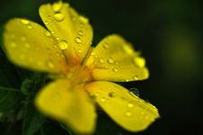 Free Water Drops On Flower Stock Images - 30452134