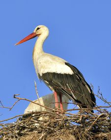 Free Stork Stock Photos - 30455623