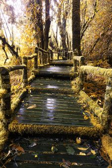 Free Moss Around The Wooden Walkway In Rain Forest In Autumn Tone Stock Image - 30457311