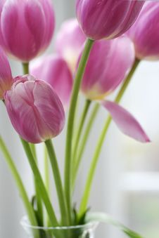Free Pink Tulips Royalty Free Stock Photo - 30459785