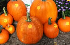 Free Pumpkins Royalty Free Stock Photography - 30460397