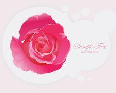 Free Beautiful Pink Roses. Stock Image - 30469011
