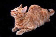 Free Cat Royalty Free Stock Photo - 30469655
