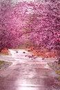 Free Pink Stock Photo - 30474670