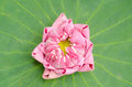 Free The Art Of Folding Lotus Stock Images - 30477794