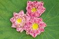 Free The Art Of Folding Lotus Petals Royalty Free Stock Photos - 30478008