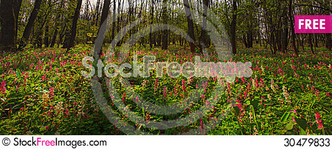 Free Wild Flowers In A Mountain Forest In Spring Stock Photos - 30479833