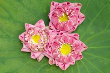 Free The Art Of Folding Lotus Petals Royalty Free Stock Photos - 30478008