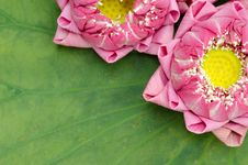 Free The Art Of Folding Lotus Petals Royalty Free Stock Images - 30478009