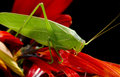 Free Adult Plant Hopper Stock Photography - 30494752