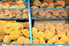 Free Natural Sponge Stock Photos - 30491633