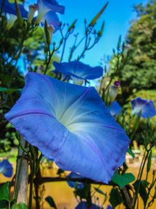 Free Blue Flower Stock Photography - 30496192