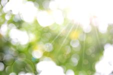 Free Spring Nature Background. Stock Photography - 30499982
