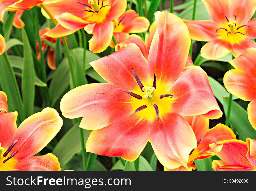 Spring flowers in the garden free stock images photos 30492008 spring flowers in the garden free stock images photos 30492008 stockfreeimages mightylinksfo