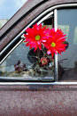 Free Daisies Cracked Glass Royalty Free Stock Photography - 3050117