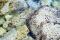 Free Reefs Royalty Free Stock Photos - 3050328