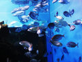Free Swimming Fishes Royalty Free Stock Photos - 3053418
