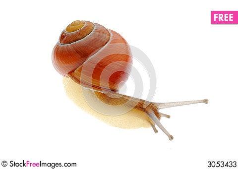 Free Snail Stock Photos - 3053433