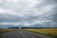 The Road Through Sunflower Field Stock Photography