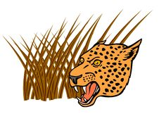 Free Leopard In The Grass On Prowl Royalty Free Stock Images - 3051999