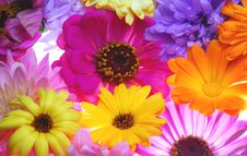 Free All Sort Color Flowers Stock Photos - 3052113