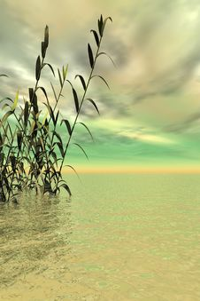 Free Water Grass Stock Photography - 3052422