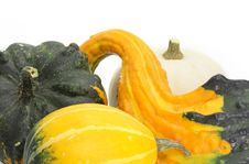 Free Four Colorful Pumpkins Royalty Free Stock Photo - 3054215