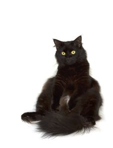 Free Black Cat Watching To You Stock Photo - 3054290